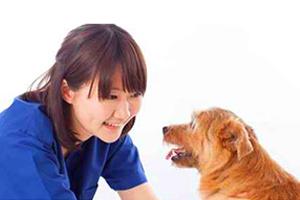 千葉県松戸市 かんじ動物病院