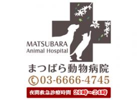 東京都江東区 まつばら動物病院