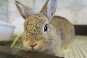 大阪府和泉市 うさぎ専門店Rabbit-Ruru