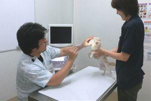 愛知県岡崎市 アロハ動物病院