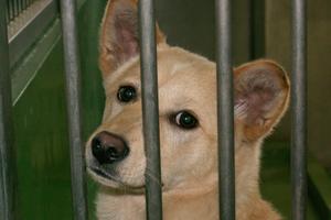 動物愛護市民団体JCDL