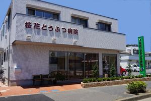 足立区南花畑 桜花どうぶつ病院
