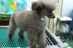網代動物病院 東京都八王子市