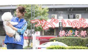一般社団法人 つなぐいのち 横浜支部 殺処分で殺される犬猫を ゼロにするための活動を行っています。