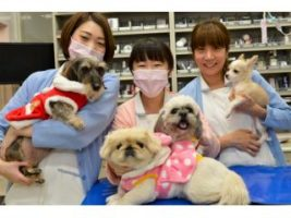 ヒマラヤン動物病院 武蔵村山市 トリマーさん募集