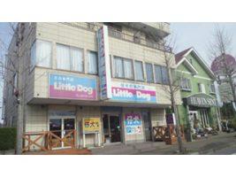 犬の専門店 リトルドッグ 茨城県守谷市  ワンちゃんのトリミング