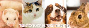 日本動物医療センター 受付スタッフ募集