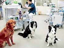 【新卒/第二新卒看護師】バディ制度による丁寧な指導!ノア動物病院 甲府