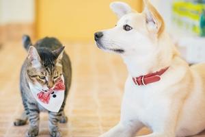 のば動物病院【経験者獣医師募集】広島県三次市