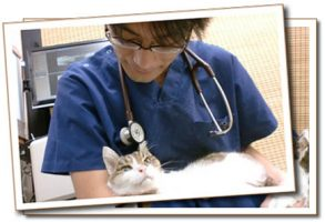 ウェルクス大曽根動物病院 看護師さん、トリマーさんを募集中です。埼玉県八潮市