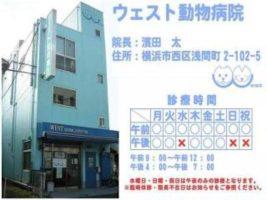 ウェスト動物病院【アルバイト】動物病院補助業務 横浜駅徒歩