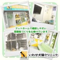 いわせ犬猫クリニック【獣医師募集】台東区