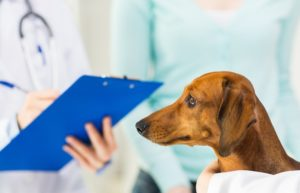 獣医師募集 もとらスマイル動物病院