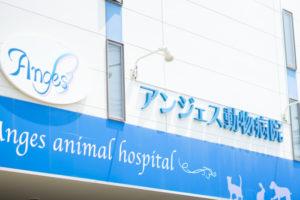 【辻堂・茅ヶ崎】動物看護師募集(アンジェス動物病院)